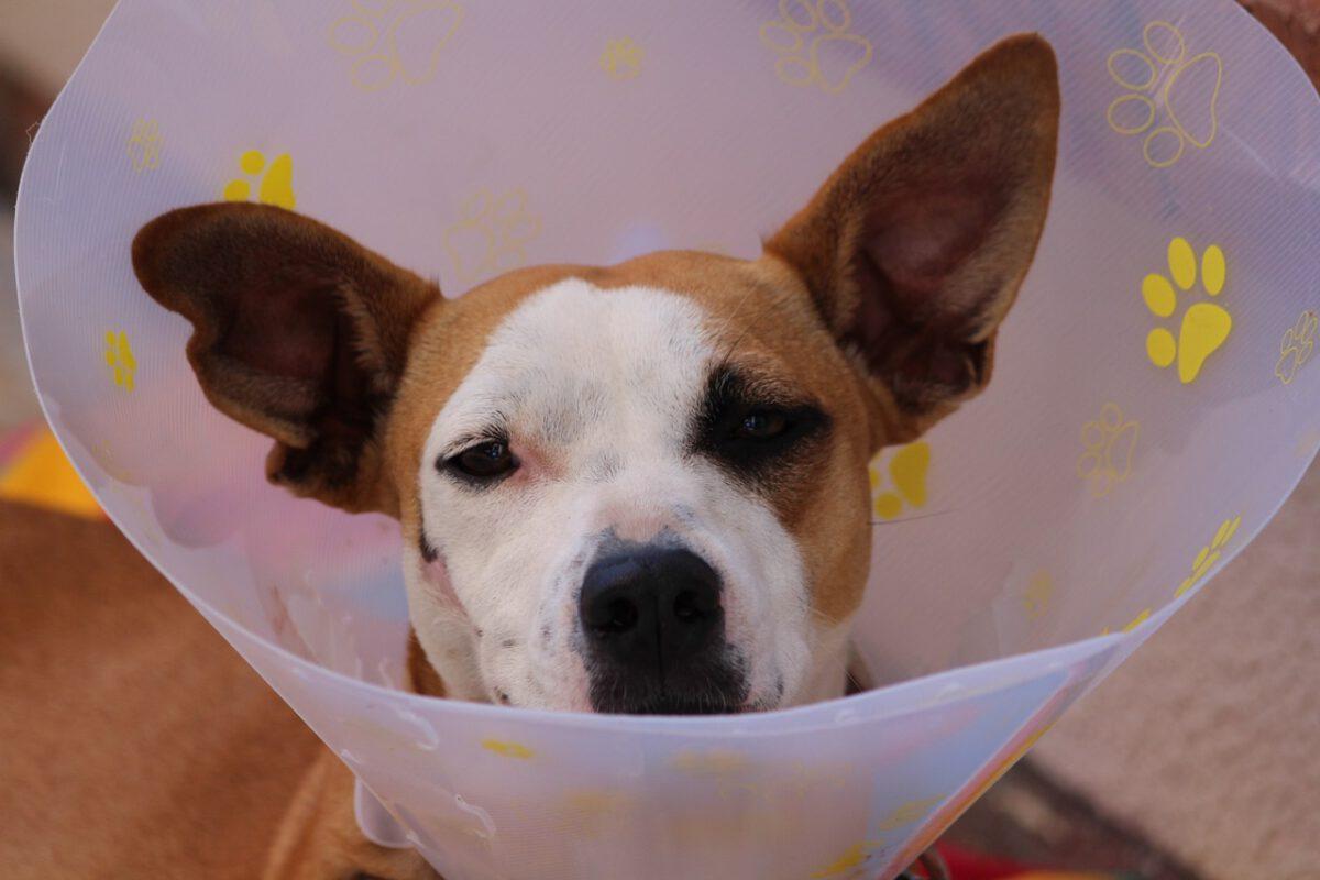Trixie biedt oplossingen voor huisdieren!